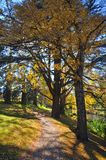 Christchurch's Hagley Park & Avon River in Autumn Stock Photography