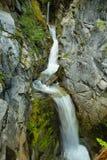 christine faller den mer regniga mt-nationalparken Trees och gräs Royaltyfri Fotografi