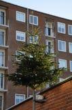 CHRISTMA drzewo DECOATTION NA ALLEEN Obraz Royalty Free