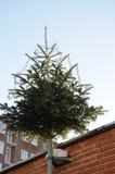 CHRISTMA drzewo DECOATTION NA ALLEEN Obrazy Stock