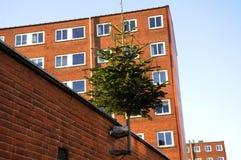 CHRISTMA TREE DECOATTION ON ALLEEN Stock Photo