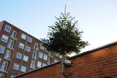 CHRISTMA TREE DECOATTION ON ALLEEN Stock Image