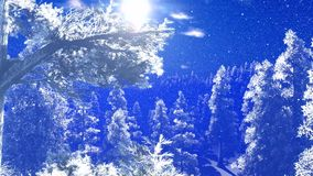 Christmac forest in mountains stock footage