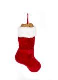 christmans ботинка Стоковое Фото
