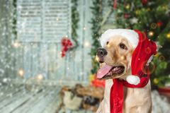 Free Christmas Stock Images - 118485854