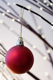 Christmas. Red christmas ornament hanging from christmas tree Stock Images