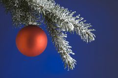 Christmas. Red christmas ball on branch on blue background Royalty Free Stock Photos