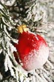 Christmas. Red christmas ball on christmas tree royalty free stock image