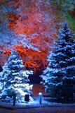Christmas. Magic Christmas tree Royalty Free Stock Images