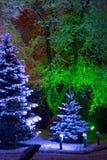 Christmas. Magic Christmas tree Stock Image