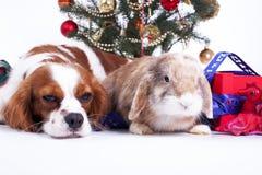 Christmas animal christmas dog pet photo. Celebrate christmas with cute puppy dog. White background stock photography