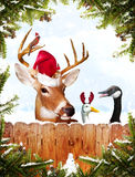 Christmas Animals Royalty Free Stock Photography