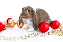 Christmas animals. Cute christmas rabbit. Rabbit bunny lop celebrate christmas with xmas bauble ornaments on isolated. White studio background. Christmas pet Royalty Free Stock Photos