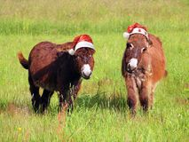 Christmas animals donkey eating grass in santa hat royalty free stock photography