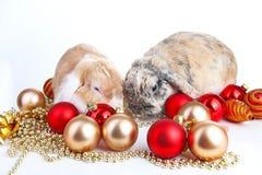 Christmas animals. Rabbit and christmas ball ornaments christmas bauble. Rabbits lop eared bunnies christmas photo. Christmas animals. Rabbit and christmas ball Royalty Free Stock Photo