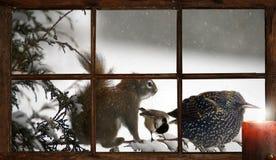 Christmas animals. Stock Photography