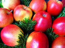 Christmas apples. Apples with fir Royalty Free Stock Photography