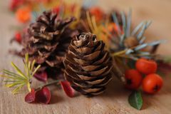 Christmas arrangement with berries and fir cones Stock Photography