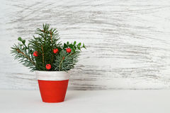 Christmas arrangement in clay pot Stock Images