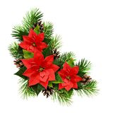 Christmas arrangement with pine twigs, cones and poinsettia flow. Christmas arrangement with pine twigs, cones, and poinsettia flowers isolated on white stock image