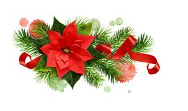 Christmas arrangement with poinsettia flower, pine twigs, red cu. Rled ribbon and watercolor blots isolated on white background royalty free stock photo