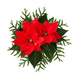 Christmas arrangement with poinsettia flowers and thuja twigs Stock Image