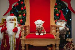 Christmas atmosphere, New Year decorations. santa claus royalty free stock photos