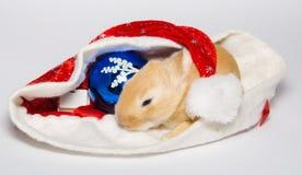 Christmas baby bunny Stock Image