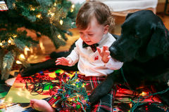 Christmas Baby and Dog. Smiling and Playing with Christmas Lights Under the Tree Stock Image