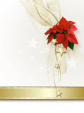 Christmas background. With red  Poinsettia Stock Photos