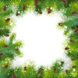 Christmas background. With christmas tree. Vector frame with green fir Stock Images
