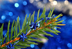 Christmas background. Spruce branch with a string of Christmas on a blue background Royalty Free Stock Image