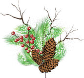 Christmas background. Christmas composition. Branches tree, branch with berries, cones, snow vector illustration