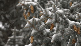 Christmas background. beautiful snow-covered fir branches with cones. soft snows. stock video