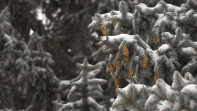 Christmas background. beautiful snow-covered fir branches with cones. soft snows. stock footage
