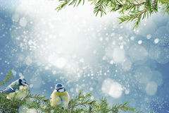 Christmas background with blue tits Royalty Free Stock Photos