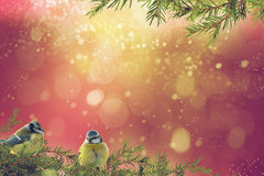 Christmas background with blue tits Stock Image