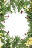 Christmas background border with evergreen fir tree Royalty Free Stock Photos