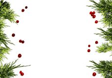 Christmas background border with evergreen fir tree and red berries Stock Photo