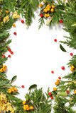 Christmas background border with evergreen fir tree Stock Images