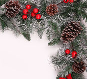 Christmas background. Branch of christmas tree with pine cones. And holly berries over white Stock Photography