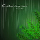Christmas background with branches of a Christmas tree. Vector illustration Royalty Free Stock Image