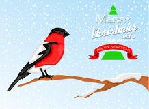 Christmas background with Bullfinch bird Stock Photo