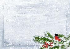 Christmas background with bullfinch on snow branch Royalty Free Stock Photos