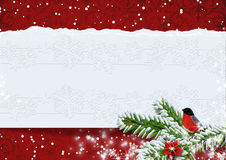 Christmas background with bullfinches.Copy space available. royalty free stock images