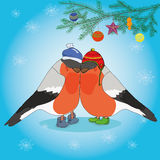 Christmas background with bullfinches and spruce Stock Photography