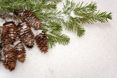 Christmas background. Bunch of cones and  spruce branches on  sn Royalty Free Stock Photography