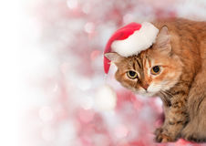 Christmas background. Cat wearing a santa hat Royalty Free Stock Photography