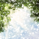 Christmas Background with Christmas Tree and Snow on Abstra. Christmas Background with Christmas Tree Twig and Snow on Abstract Glitter Stock Photos