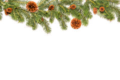 Christmas background decoration with white wall. And pine cones Royalty Free Stock Image